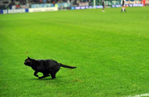 Le Chat des Girondins