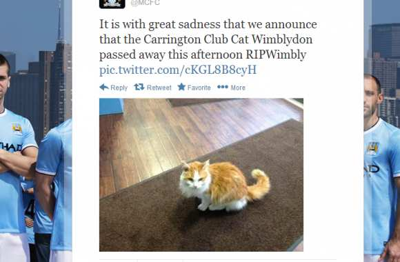 Photo : le chat des Citizens est mort