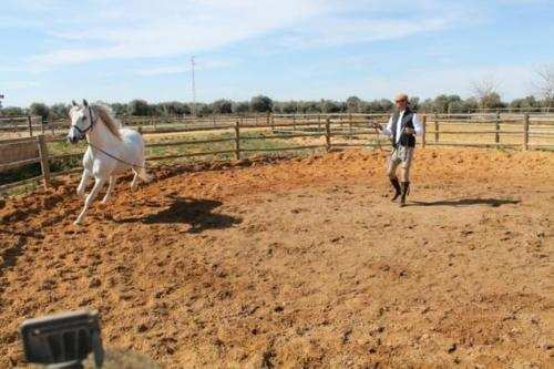 Photo : Sergio Ramos et son cheval